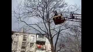Спасение кошки - снимаем с высокого дерева, г. Николаев, НГОЗЖ, 20.03.2014г.