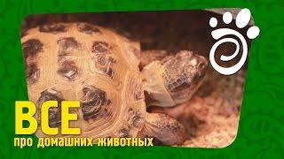 Правильный Уход Для Черепахи (Часть Вторая). Все О Домашних Животных(Основное описание ролика Сухопутные черепахи - тема интересная, как правильно создать для них условия:..., 2014-12-16T13:00:09.000Z)