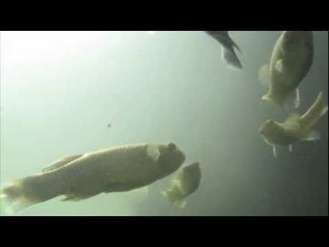 Life In Baltimore's Inner Harbor: Fish