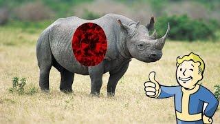 warframe t4 survival solo rhino prime