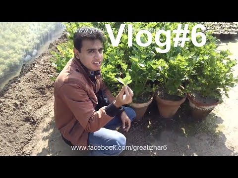 Vlog#6 | Visit at Skyseeds Nursery | Nursery Garden Center | Organic Vegetable Gardening