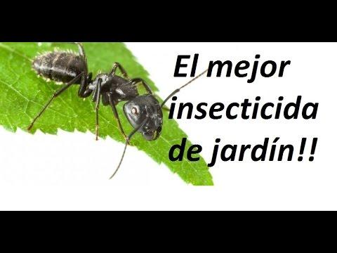 Como eliminar todos los insectos de jard n de forma for Como eliminar los mosquitos del jardin