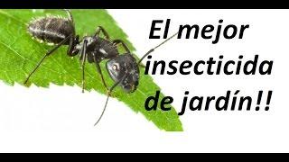 como eliminar todos los insectos de jardín de forma ecológica
