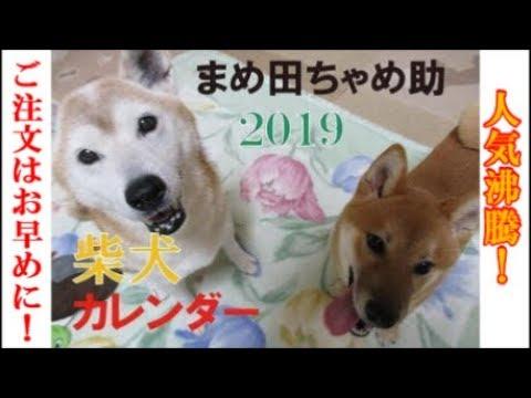 「まめ田ちゃめ助」カレンダー予約受付中!柴犬まめとちゃめ