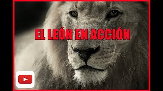 El Rey León en Acción│ The Lion King in Action