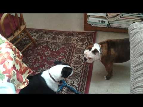 video - 2011-11-25-10-27-59.mp4