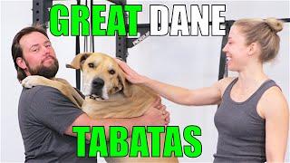 GREAT DANE TABATAS!