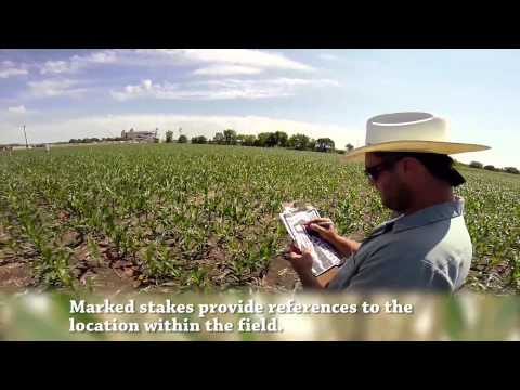 Sever's Corn Maze –How's It Made?