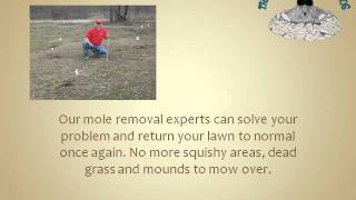 Mole Control and Removal in Lancaster OH Lawns and Landscape