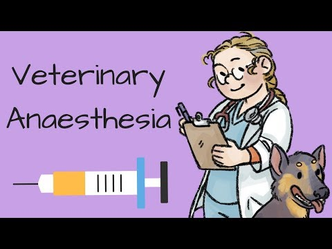 An Introduction To Veterinary Anaesthesia