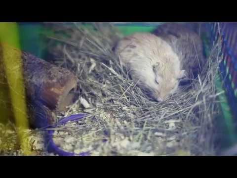 видео: Мышка родила!!!!!