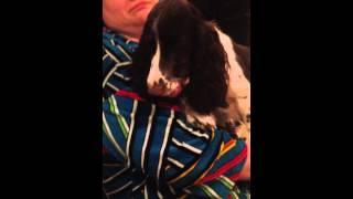 Собака ест хлеб )) Прикол
