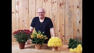 Arranjo flores, plantas e ervas aromáticas para decoração rústica