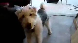 Funny Animal Compilation (YNV) - July 10, 2011