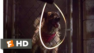 Look Who's Talking Now (1993) - At the Dog Pound Scene (1/10)   Movieclips