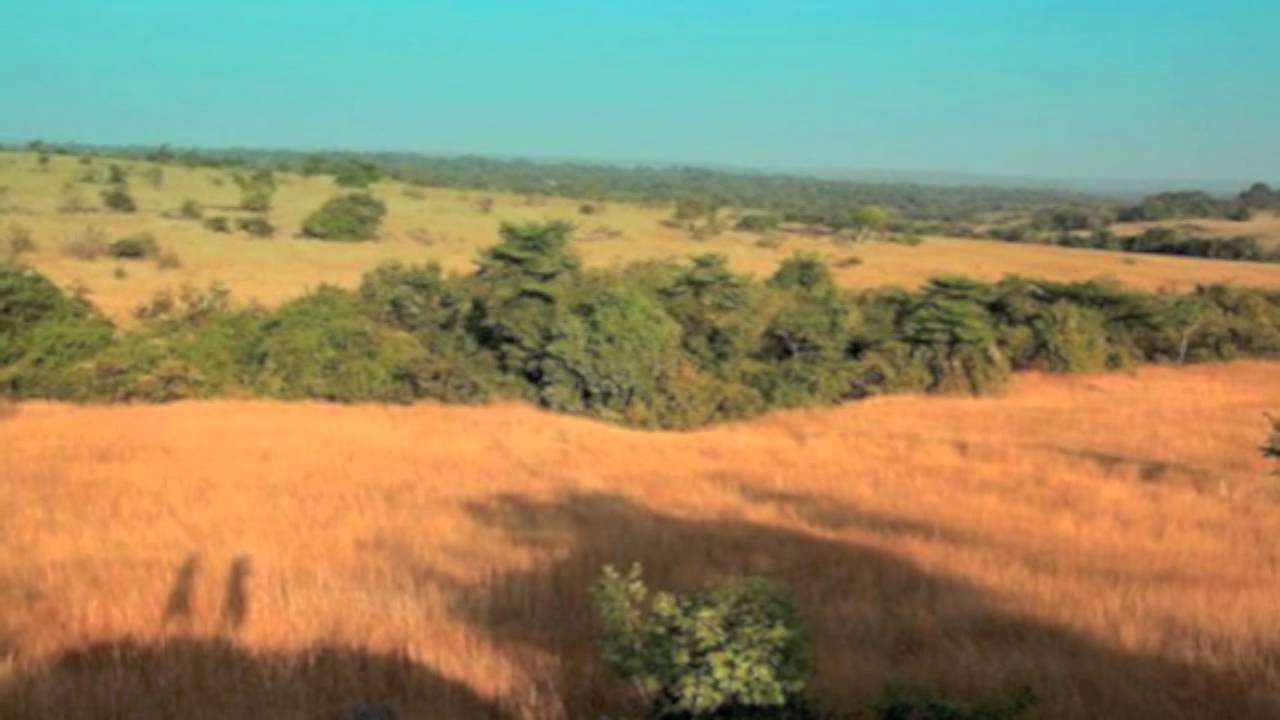 african grassland features Location tropical grasslands are located near the equator, between the tropic of cancer and the tropic of capricorn they cover much of africa as well as large areas.