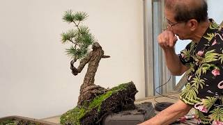 Transforming Bonsai - White Pine Restoration