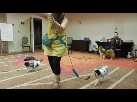 Japanese Chin service dogs dancing slow