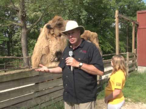 Scovill Zoo Show 2013