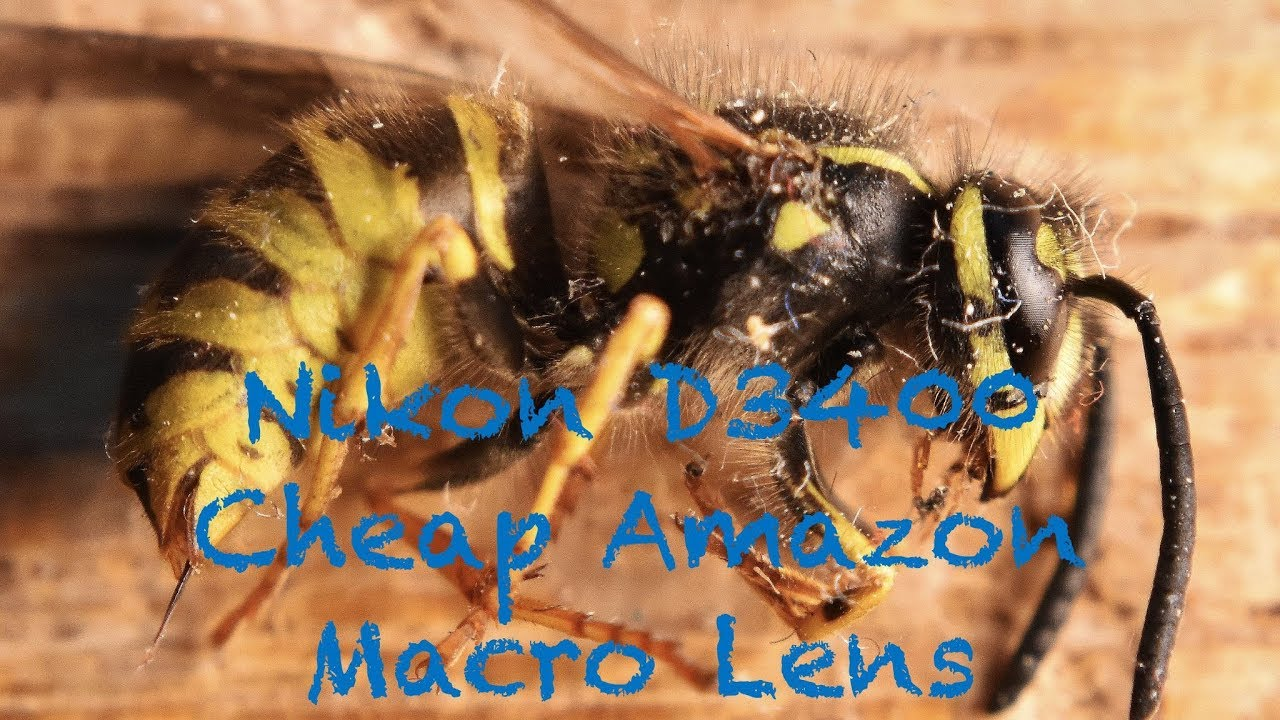 Nikon D3400 Cheap Amazon Macro Lens *Sample Footage*