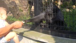 spoko małpa w zoo warszawa