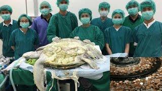 কচ্ছপের পেটে গুপ্তধন !!! জেনে নিন আসল কাহিনী  || Freaky News