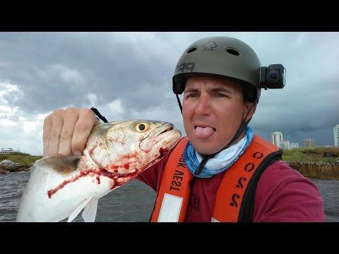 Tampa Bay Fishing Action - Jacks, Snapper, Snook, Bluefish