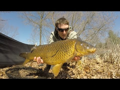 Carp And Bass Fishing A Small Pond In Rhode Island