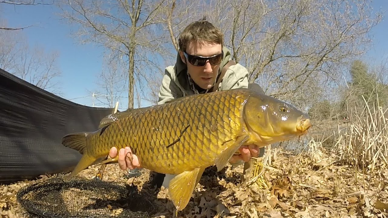 Carp and bass fishing a small pond in rhode island youtube for Buy bass fish for pond