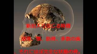 ヒト属新種 ホモ・ナレディ発見