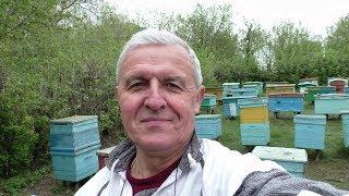 Что делать, если пчелы заложили маточник? Как остановить роение и упорядочить гнездо.