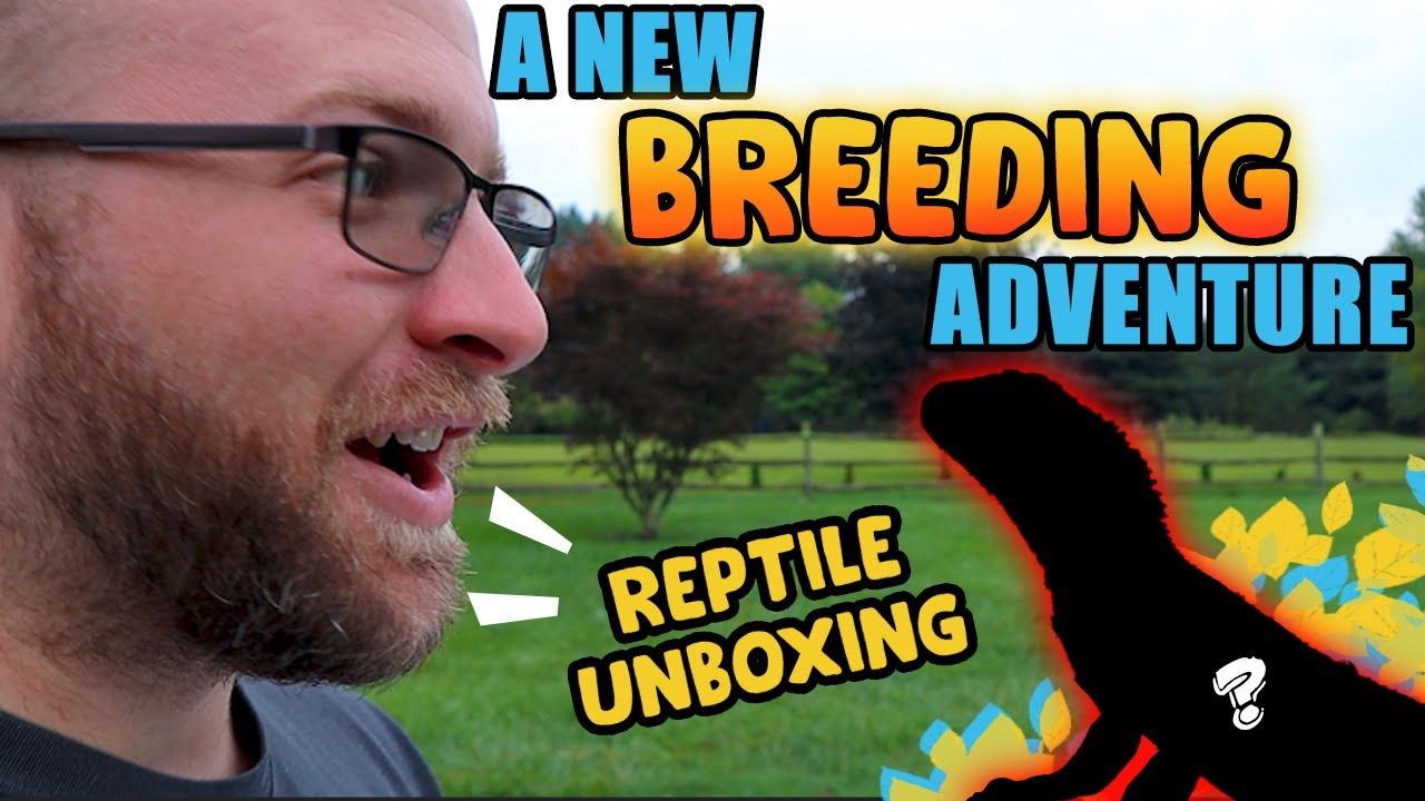 Unboxing A NEW BREEDING Project! This Will Be DIFFICULT!