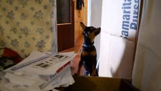 talking dog! говорящая собака!