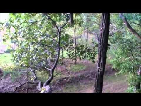 InsaneArchery Camera Bow Mount - West Virginia Doe...
