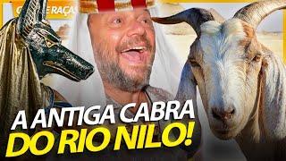 CABRA ANGLONUBIANA, A CABRA DOS ANTIGOS EGÍPCIOS! | RICHARD RASMUSSEN