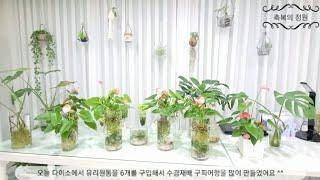 수경식물의 다양한 친환경인테리어 구피키우기 식물인테리어…