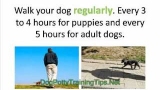 Dog Potty Training - What to do if Your Dog Goes Inside the House
