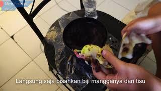 Gambar cover Menanam Biji Mangga dari Tisu dan Dipindahkan ke Tanah Dalam Pot (Planted Mango and Moved to Pot)