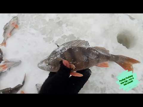 Рыбалка в лютую вьюгу , любовский плёс #Рославль