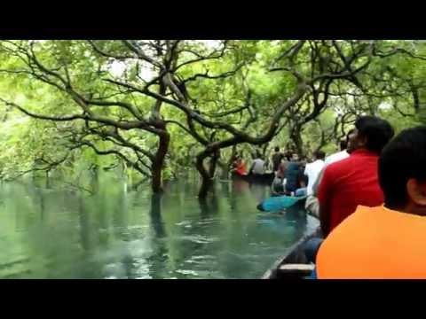 Ratargul Swamp Forest, Sylhet, Bangladesh