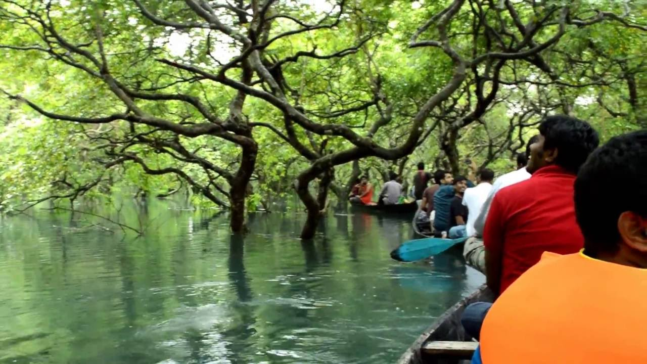 Ratargul Swamp Forest, Sylhet, Bangladesh - YouTube