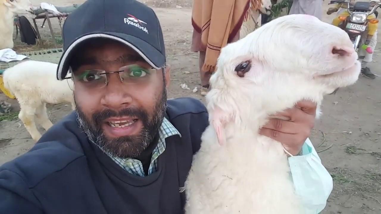 Bakra Eid 2018 - Bakra Mandi Visit 7th Feb 2018 AISA SHUGHAL AJJ TAK NAHI  DEKHA HO GA !