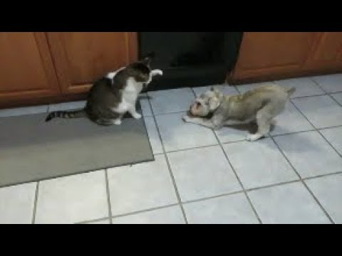 Milo and Kitten's Night Time Routine   Schnauzer Sunday Short    Dog Mom Life