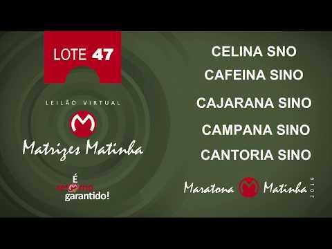 LOTE 47  Matrizes Matinha 2019