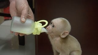 cute baby monkeys