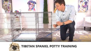 Tibetan Spaniel Potty Training from WorldFamous Dog Trainer Zak George  Tibetan Spaniel Puppy