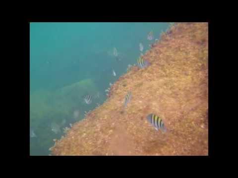 Snorkeling the Jetties, St. Andrews State Park, Panama City Beach, 10/19/2016