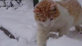 Кошка играет с  мышкой