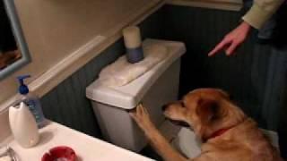 Big B's Bowl-red Heeler Australian Cattle Dog Flushing Toliet
