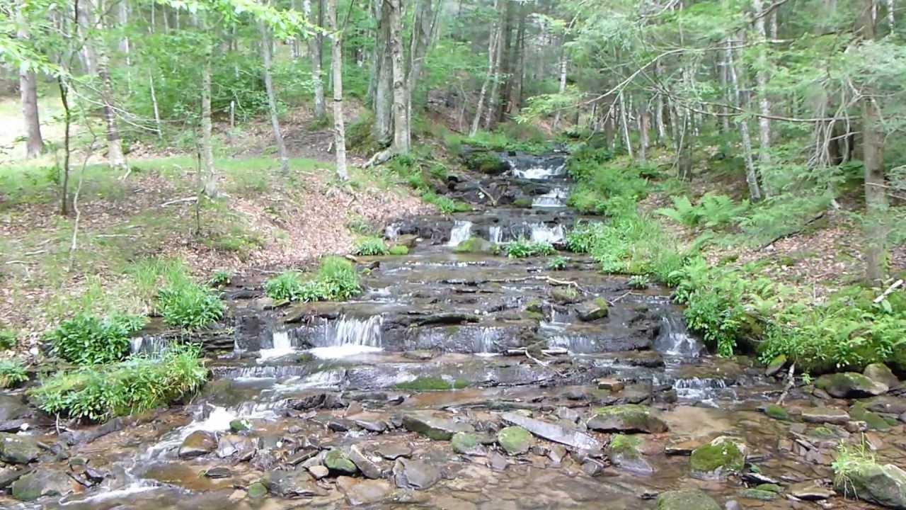 relaxing stream flow from judy springs natural spring in west